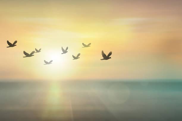 Silhouette free birds flying together in the sunset sky picture id1021707292?b=1&k=6&m=1021707292&s=612x612&w=0&h=zzsaufuzw3pocohc4 coboluxz coa8tatrijzgoo4k=