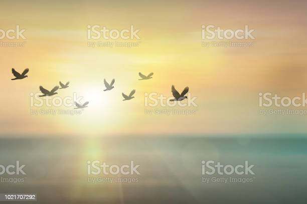Photo of Silhouette free birds flying together in the  sunset sky.