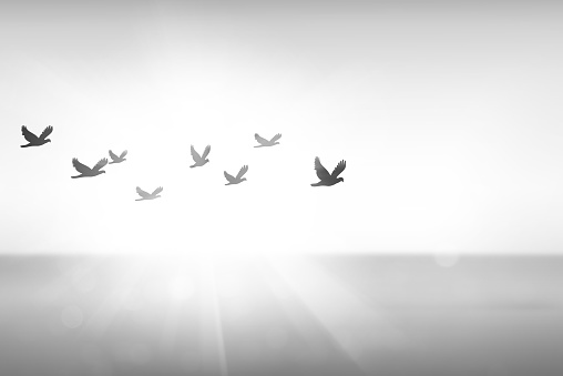 istock Silhouette free birds flying together in the  sunset sky. 1025358484