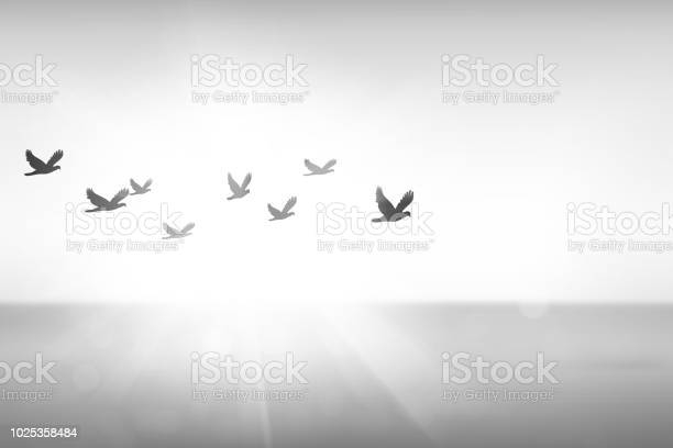 Silhouette free birds flying together in the sunset sky picture id1025358484?b=1&k=6&m=1025358484&s=612x612&h=snoyeqzxkb44nmssgxcudprqlgon5ssy4cgzrraksl0=