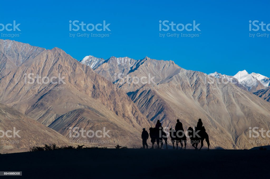 Silhouette image of camels stock photo
