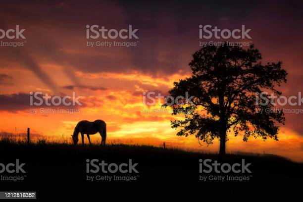 Photo of silhouette image of horse grazing beside tree under setting sun