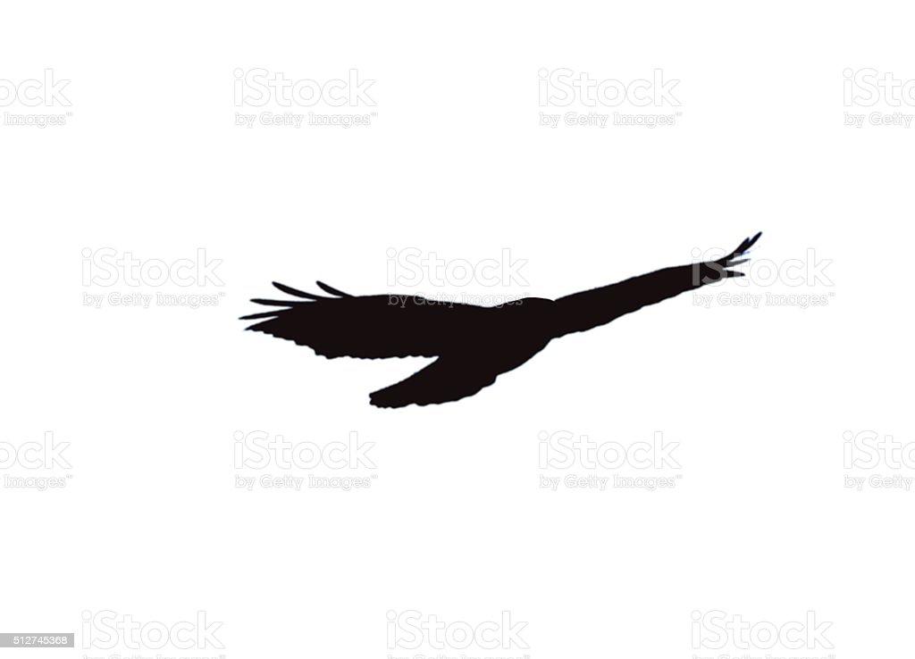 Raptors Bird Anatomy Diagram Silhouette - Find Wiring Diagram •