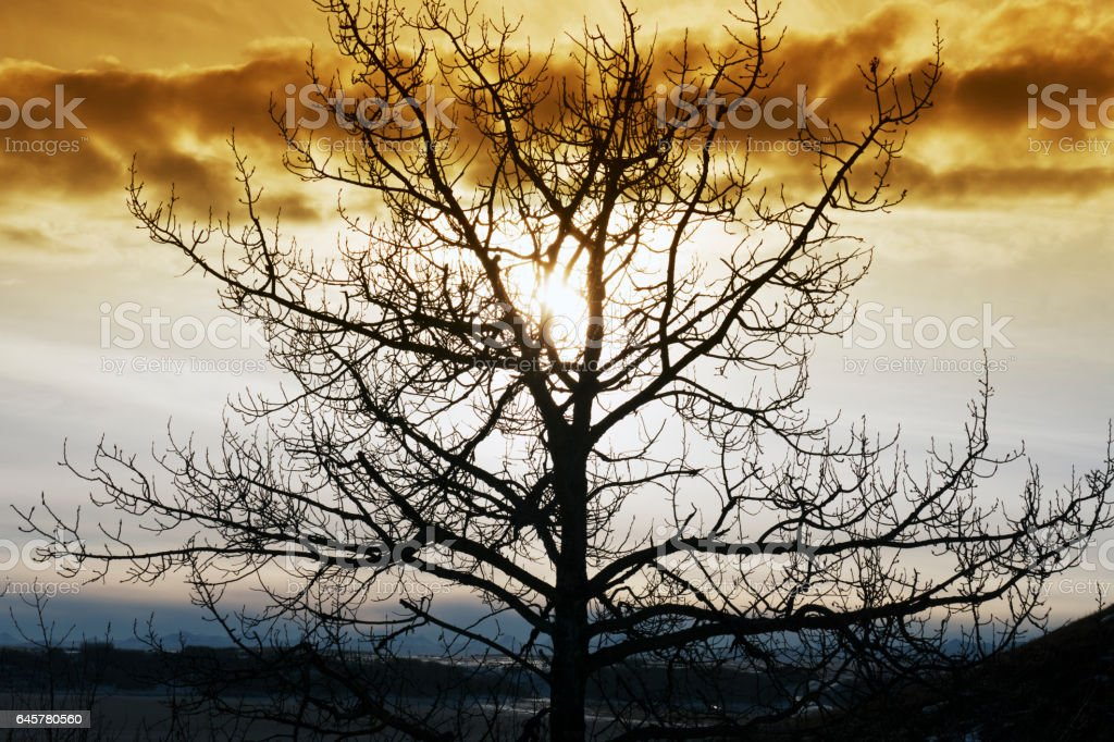 Silhouette of a bare tree against the sky in the Glenbow Ranch Provincial Park,located between the city of Calgary and the town of Cochrane in Alberta,Canada stock photo