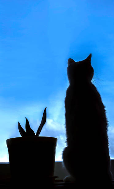 Silhouette of a cat looking out the window picture id659508352?b=1&k=6&m=659508352&s=612x612&w=0&h=vlurf g9xwwvavhr757di5edp6nxgmhdx t3sni5gbq=