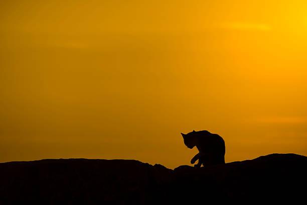 Silhouette of a cat picture id603162854?b=1&k=6&m=603162854&s=612x612&w=0&h=rbiaeb jwznbgkh4v kti0ltxsujb nnknpgnxvav30=