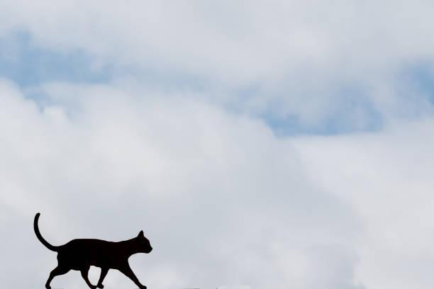 Silhouette of a cat picture id959147900?b=1&k=6&m=959147900&s=612x612&w=0&h=bwfwj3hh1eyjiqlx7m53f41q2ahnpefbovgjlek dlk=