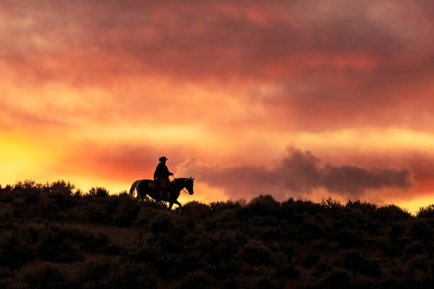Silhouette of a Cowboy During a Glorious Sunset High quality stock photo of a silhouetted horseback rider on a hill during a spectacular sunset in the Utah countryside working animal stock pictures, royalty-free photos & images