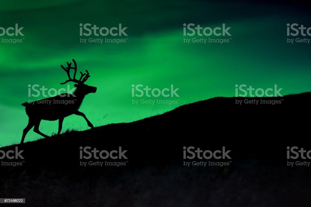 Silhouette eines Hirsches vor dem Hintergrund der Borealis Leuchten in der Nacht – Foto