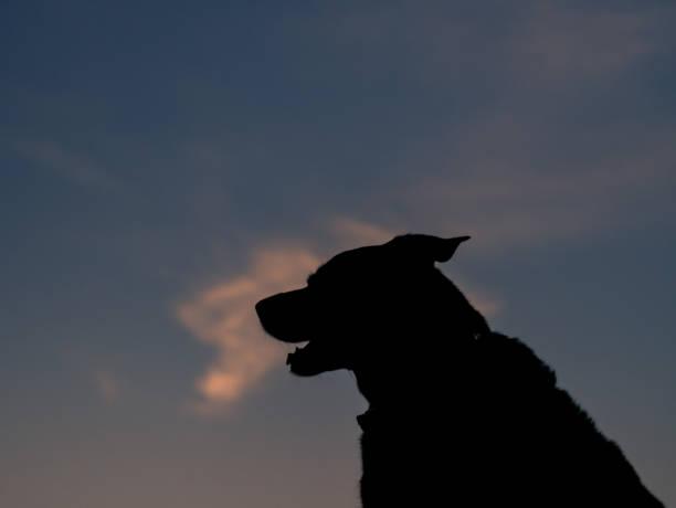 Silhouette of a dog against sky during sunset picture id920584344?b=1&k=6&m=920584344&s=612x612&w=0&h=f71knm5kvhodhgxayw2z3 7nlkouqpvaz4k2mvtfnyk=