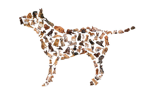 silhouette de chien - chihuahua chien de race photos et images de collection