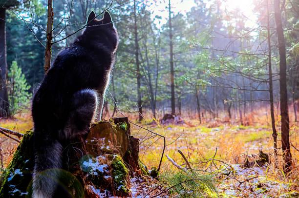 Silhouette of a dog sitting picture id942897238?b=1&k=6&m=942897238&s=612x612&w=0&h=n6u8lndjpjbagpt8voiyk uafbwkt6xesbfrbphjlbo=