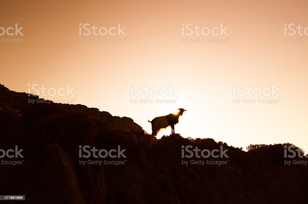 Silhouette of a goat against sunset stock photo