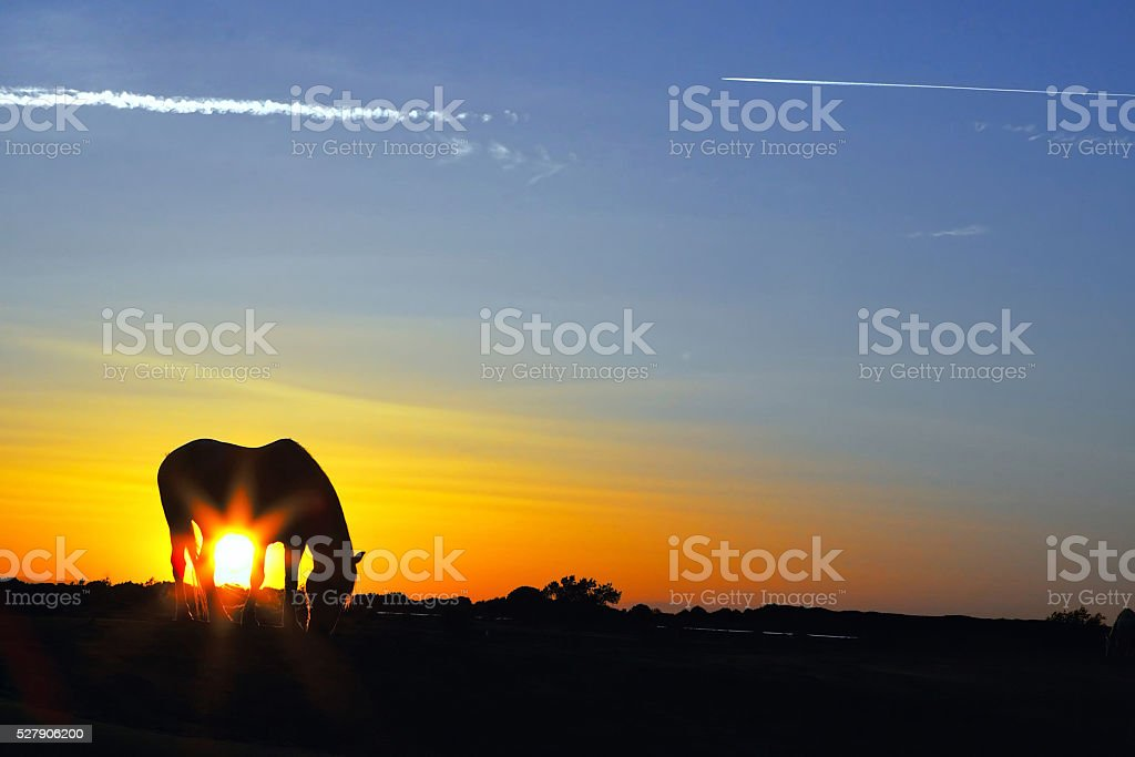 Silhouette of a horse at sunrise stock photo