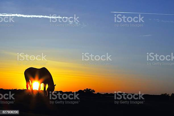 Photo of Silhouette of a horse at sunrise