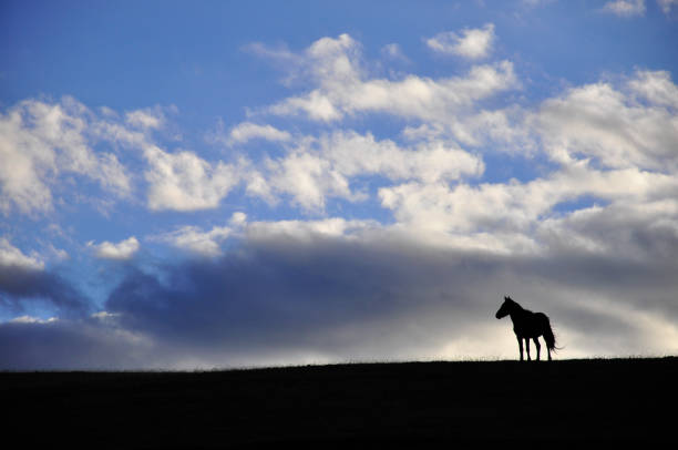 silhouette of a horse high on a hill with a cloud in the sky stock photo