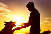 silhouette of young man with thoroughbred dog in the field at sunset, the pet executing the command and give the paw to the owner, the concept of active leisure and friendship with animals