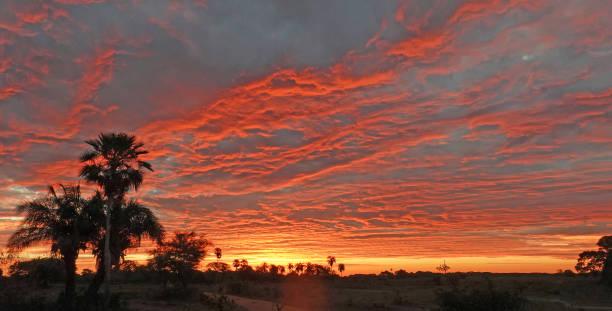 Silhouette einer Palme gegen einen wunderschönen orangen bewölkten Sonnenuntergang – Foto