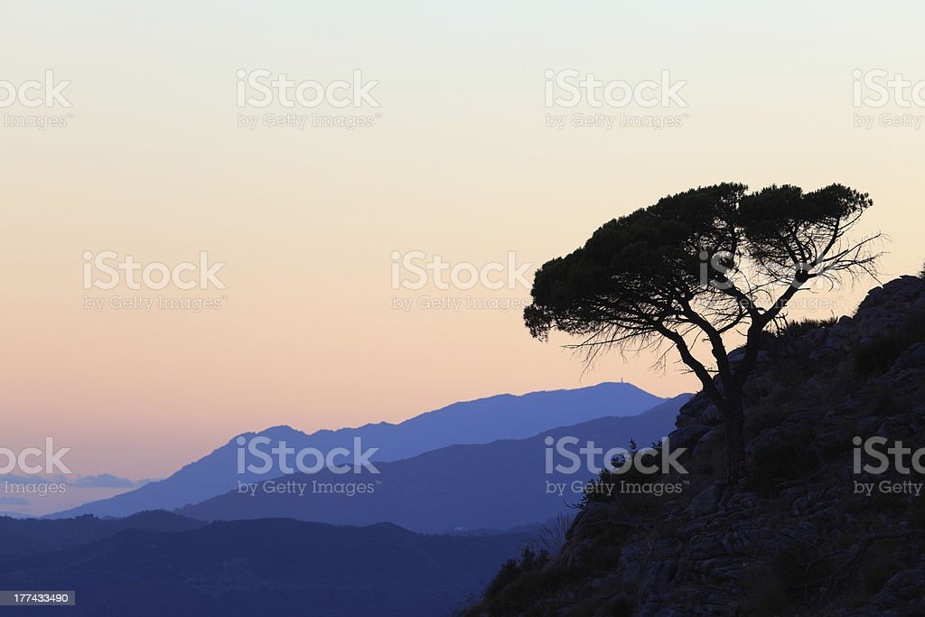 Silhouette of a pine tree on the mountain stock photo