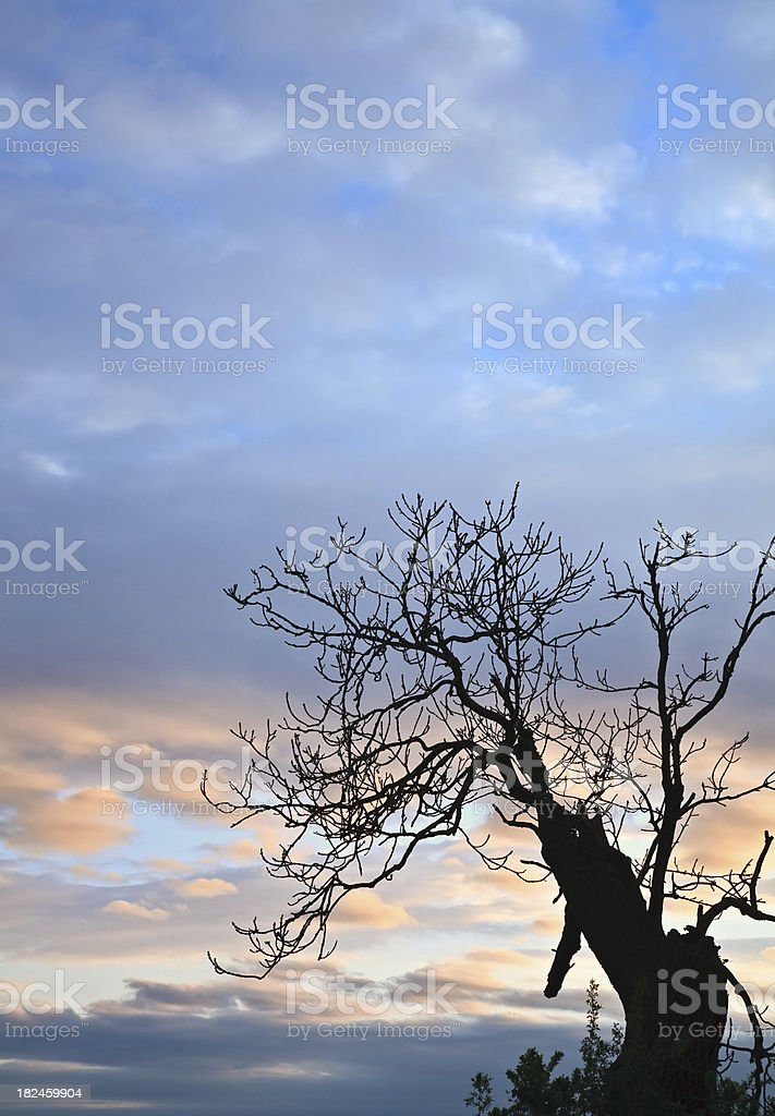 Silhouette of a tree against dramatic sky royalty-free stock photo