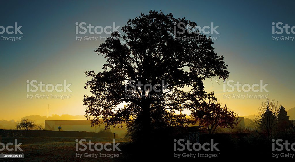 Silhouette of a tree at sunset royalty-free stock photo