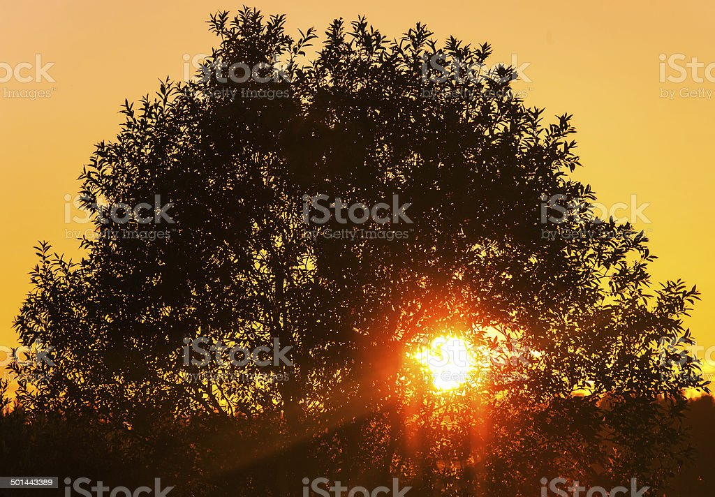 Silhouette of a tree royalty-free stock photo