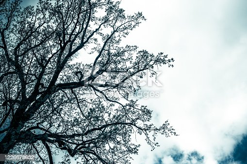 Silhouette of a gloomy mystical tree without leaves against the background of the evening sky. Depressive photo in blue tone
