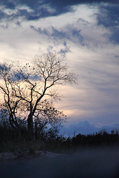 Silhouette of a Tree without leaves with a Gloomy Cloudy Sky stock photo