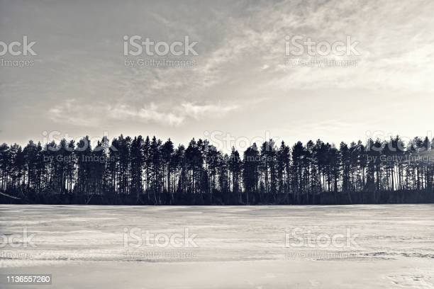 Photo of Silhouette of a winter forest in Scandinavia