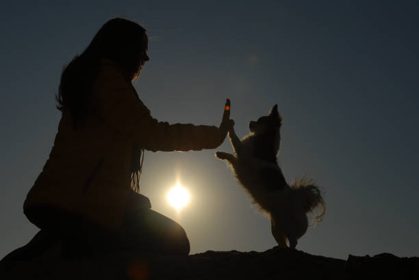 Silhouette of active sport woman hand touching paw of her small picture id1204429488?b=1&k=6&m=1204429488&s=612x612&w=0&h=slnrqm17qlimhch5es7ku1m11su7 fbhl ky7irvq3q=