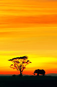 Silhouette of African elephant and lonely tree against the backdrop of the beautiful red and yellow sunset in the Serengeti National Park. Africa. Wildlife of Tanzania.