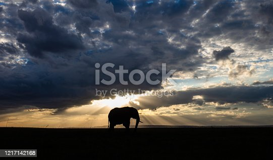 Silhouette of African elephant walking in the wild at sunset. Copy space.