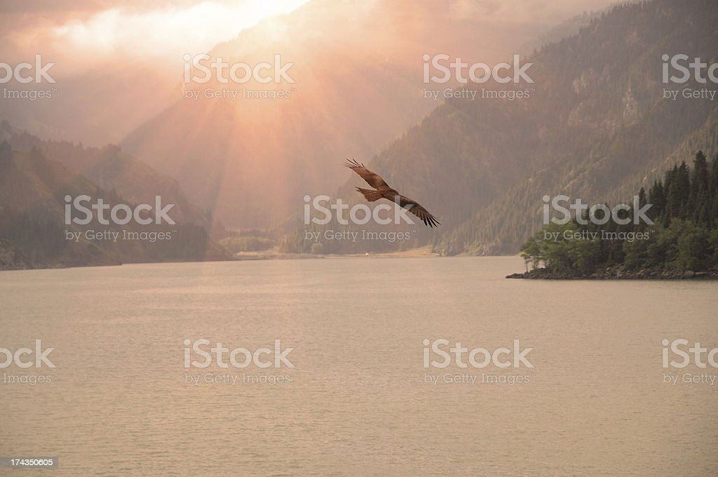 Silhouette  of an eagle flying on sunrise stock photo