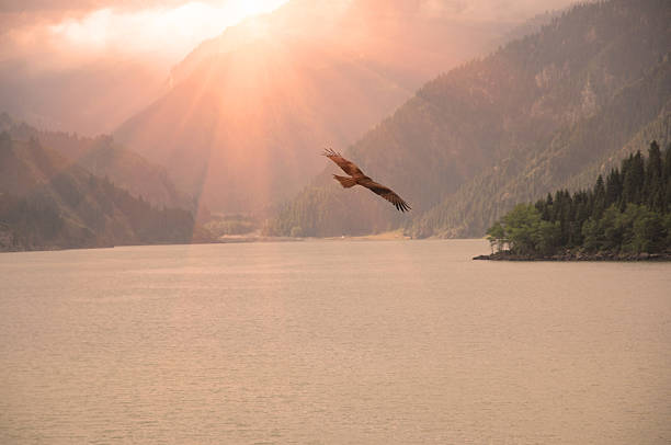 silhouette  of an eagle flying on sunrise - hawk bird stock photos and pictures