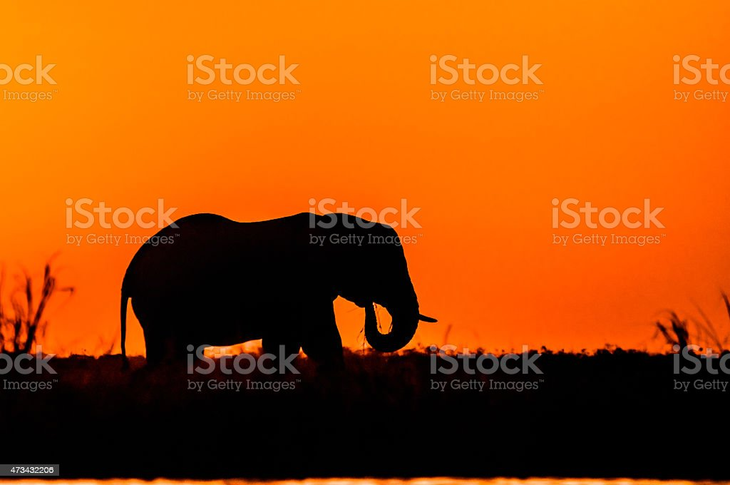 Silhouette of an Elephant stock photo