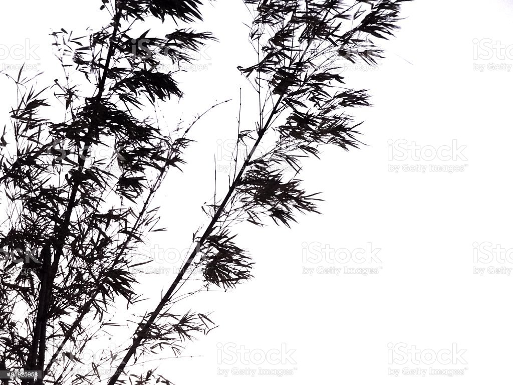 Silhouette of bamboo plant with stems and leaves stock photo