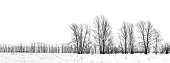 Silhouette of bare black birch-trees winter on white background