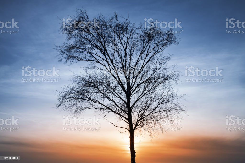 Silhouette of bare tree over colorful cloudy sky stock photo