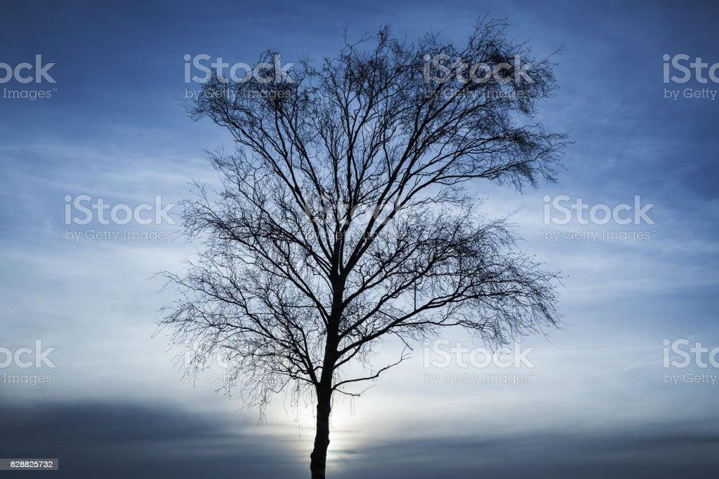Silhouette of bare tree over dark blue sky stock photo