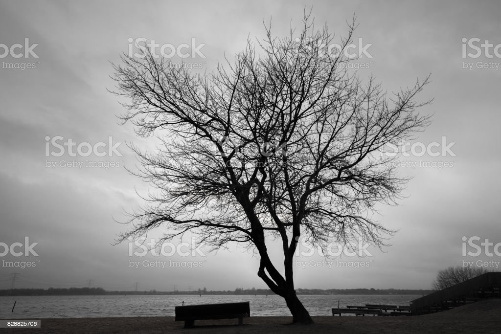 Silhouette of bare tree over dark cloudy sky stock photo