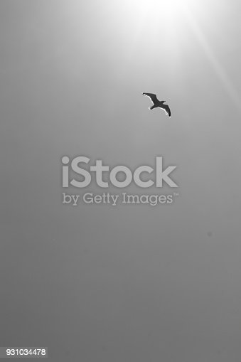 istock silhouette of bird high up in the sky flying towards the sun, balk andw hiet 931034478