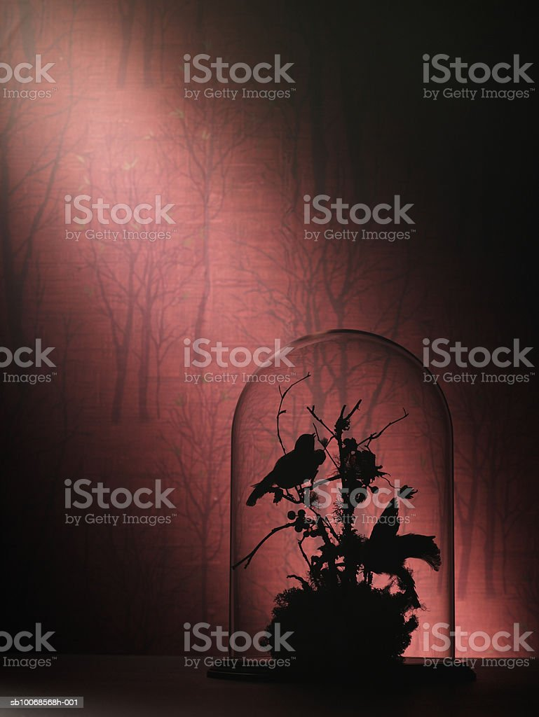 Silhouette of birds and branches under glass jar royalty-free stock photo