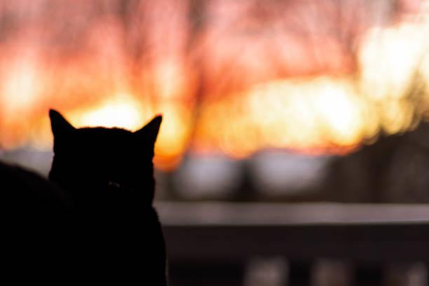 Silhouette of black cat at sunset picture id1141535280?b=1&k=6&m=1141535280&s=612x612&w=0&h=vdw4y4prjajo525tqhtjza4uqh0uujovlbhx8g7q86g=