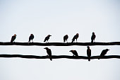 Gathering of black crows in the evening