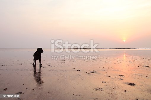 Silhouette of Black labrador dog playing at the beach