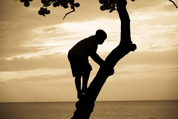silhouette of boy climbing tree stock photo