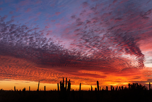Silhouette of cactus at a warm sunset in the desert of Baja California in La Paz, B.C.S., Mexico