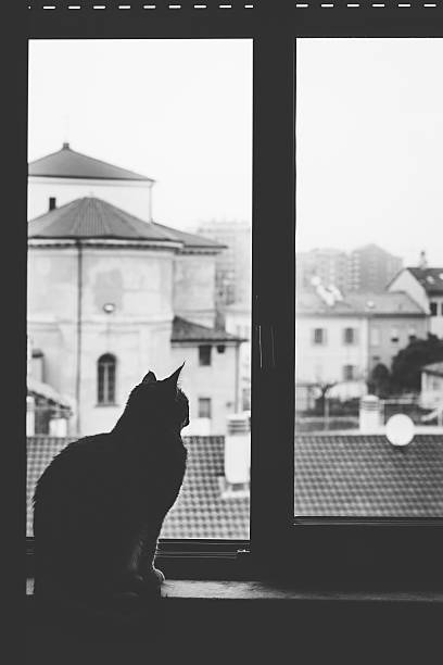 Silhouette of cat lookin out of window picture id470027322?b=1&k=6&m=470027322&s=612x612&w=0&h=u3 y2dwxh12eyt3dtvwepwggk9uibecv4nxdtyrzchy=