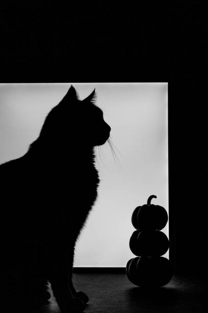 Silhouette of cat sitting next to small three stacked pumpkins picture id1280626588?b=1&k=6&m=1280626588&s=612x612&w=0&h=tk 55elnmjvhscdc8moj75zekpi4wzpzhkxduwbcf7y=