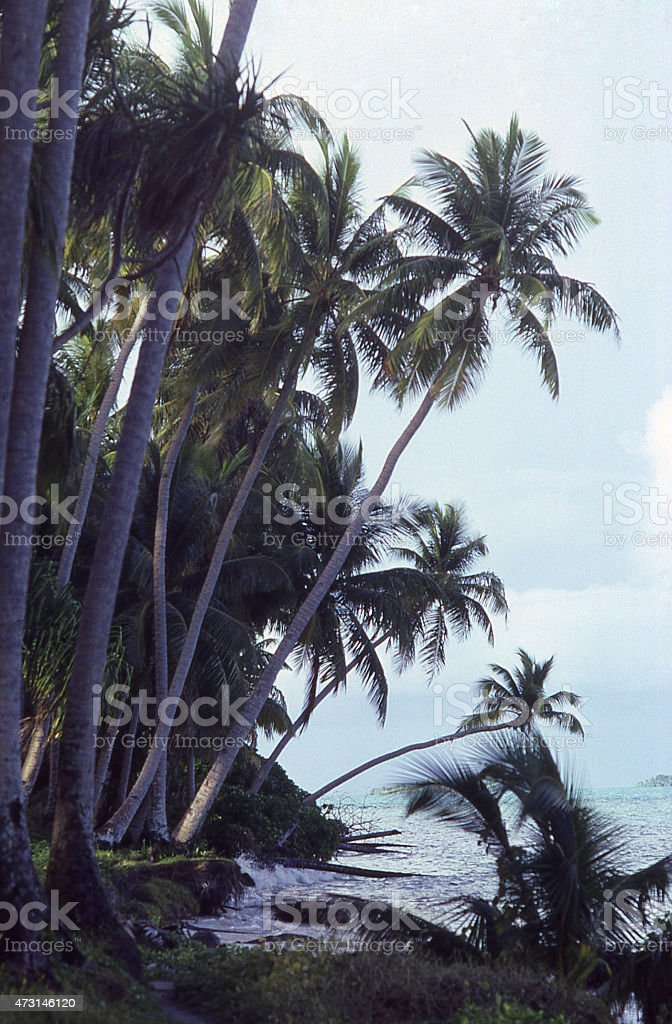 Silhouette of Coconut Palms over Pacific Ocean beach Marshall Islands stock photo